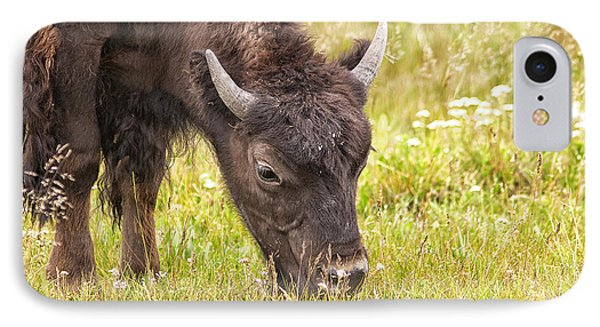 IPhone Case featuring the photograph Young Bison by Belinda Greb