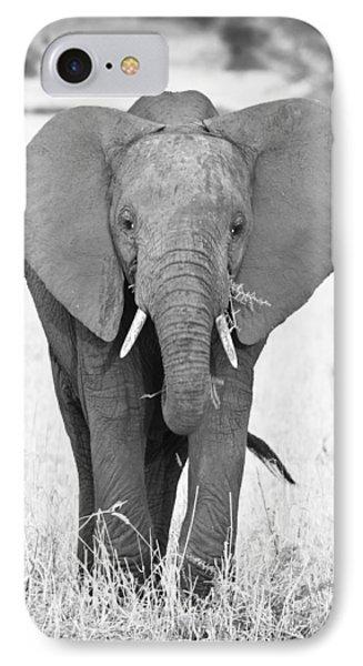 Young Bull Elephant IPhone Case by Adam Romanowicz