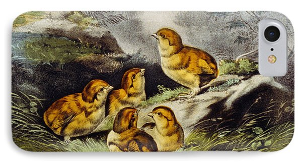 Young Chicks Circa 1856 IPhone Case by Aged Pixel