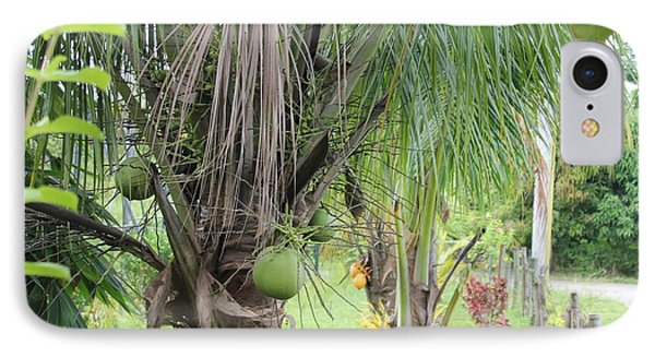 IPhone Case featuring the photograph Young Coconut Tree by Cyril Maza