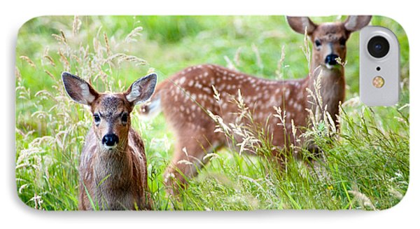 IPhone Case featuring the photograph Young Deer by Crystal Hoeveler