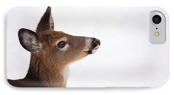 Young Deer In Winter Phone Case by Karol Livote