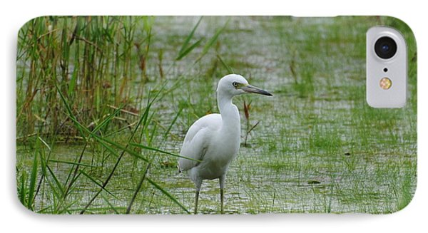 Juvenile Little Blue Heron At Willow Pond IPhone Case by Dan Williams