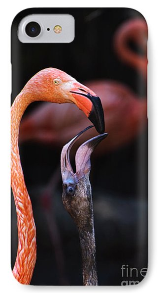 Young Flamingo Feeding IPhone Case by Terry Garvin