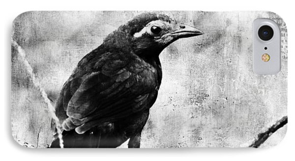 Young Grackle Phone Case by Cassie Peters
