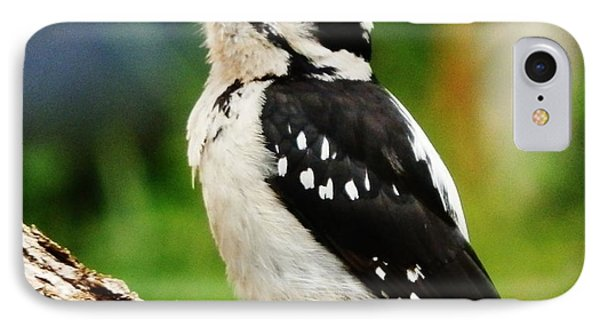 Young Hairy Woodpecker Phone Case by VLee Watson
