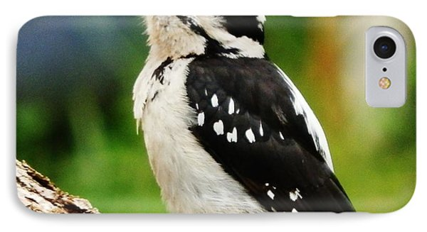 IPhone Case featuring the photograph Young Hairy Woodpecker by VLee Watson