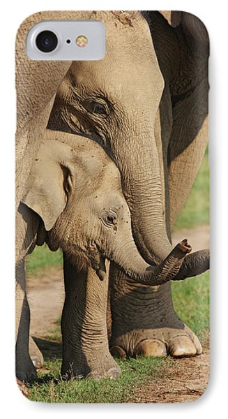 Young Indian Elephants At Play,corbett IPhone Case