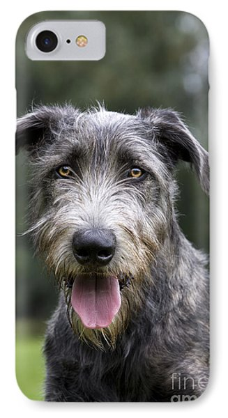 Young Irish Wolfhound IPhone Case by Johan De Meester