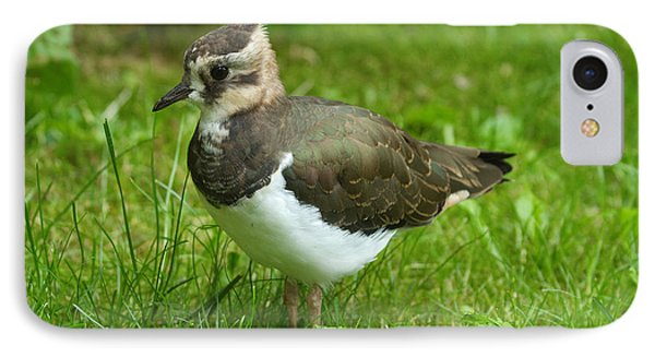 Lapwing iPhone 7 Case - Young Lapwing by Helmut Pieper