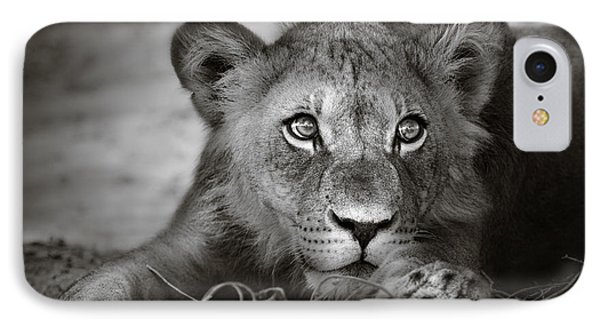 Young Lion Portrait Phone Case by Johan Swanepoel