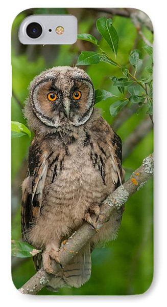 Young Long-eared Owl Phone Case by Janne Mankinen