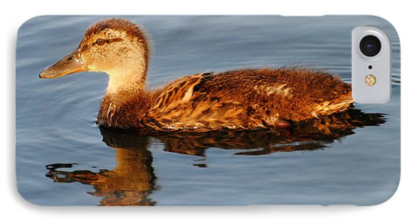 Young Mallard Hen At Ocracoke IPhone Case by Dan Williams