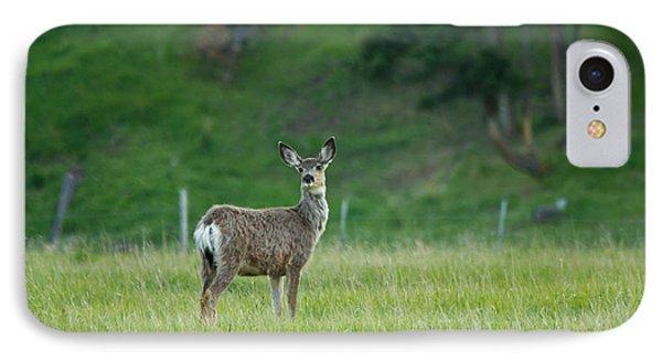 Young Mule Deer Phone Case by Eti Reid