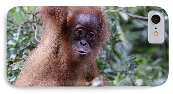 Young Orangutan Kiss Phone Case by Shoal Hollingsworth