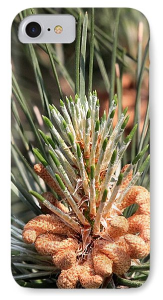 Young Pine Cone  IPhone Case by Ramabhadran Thirupattur