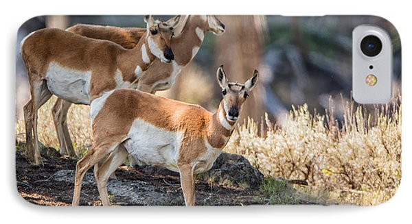Young Pronghorn At Yellowstone IPhone Case by Andres Leon