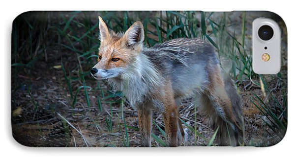 Young Red Fox IPhone Case by Robert Bales