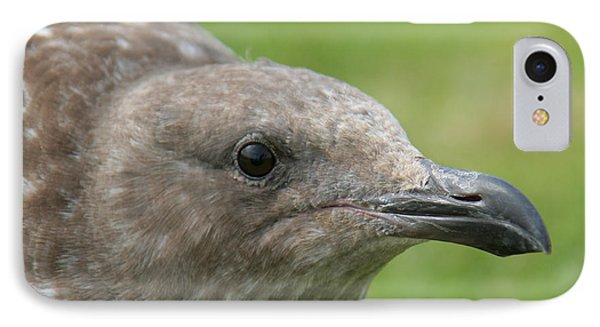 IPhone Case featuring the photograph Young Seagull by Bob and Jan Shriner