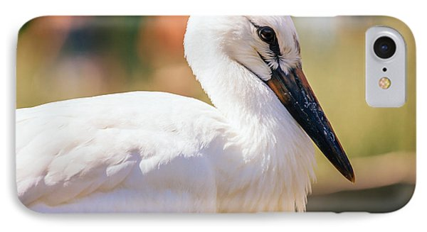 Young Stork Portrait IPhone Case by Pati Photography
