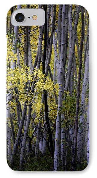 Young Aspens IPhone Case by The Forests Edge Photography - Diane Sandoval
