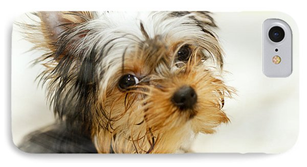 Yourkshire Terrier Puppy Looking  Loveable IPhone Case