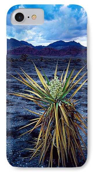 Yucca Flower In Red Rock Canyon IPhone Case by Panoramic Images