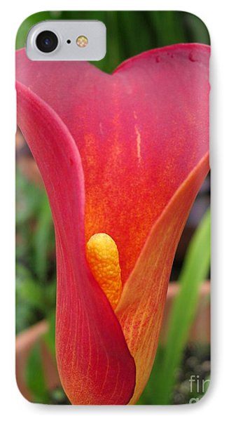 IPhone Case featuring the photograph Zantedeschia Named Red Sox by J McCombie