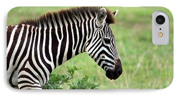 Zebra IPhone 7 Case by Aidan Moran