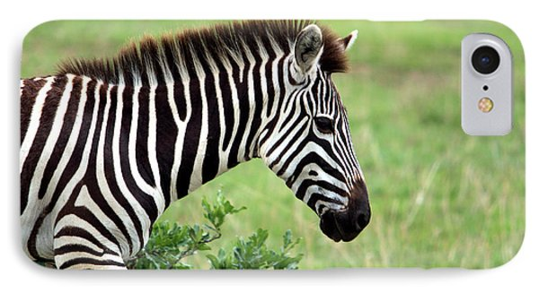 Zebra IPhone Case by Aidan Moran