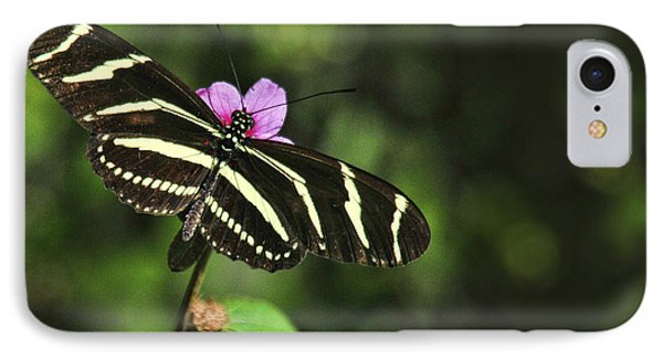 Zebra IPhone Case by Don Durfee