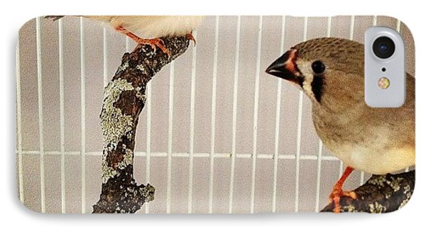 Zebra Finches IPhone Case by Christy Beckwith