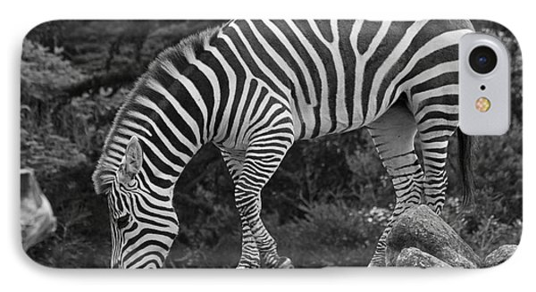 IPhone Case featuring the photograph Zebra In Black And White by Kate Brown