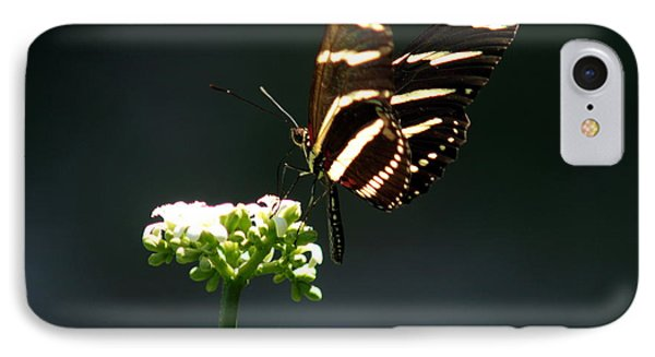 Zebra Longwing IPhone Case by Greg Allore
