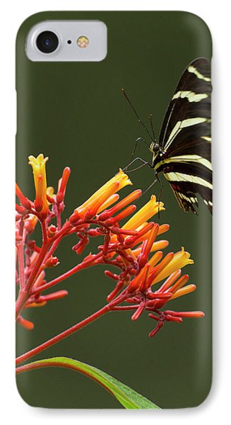 Zebra Longwing On Fire Bush Flowers IPhone Case by Maresa Pryor