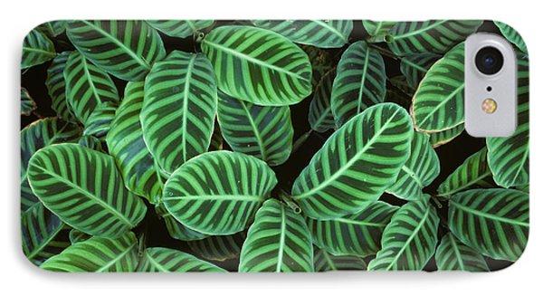 Zebra Plant Leaves Manila Philippines IPhone Case by Nigel Cattlin
