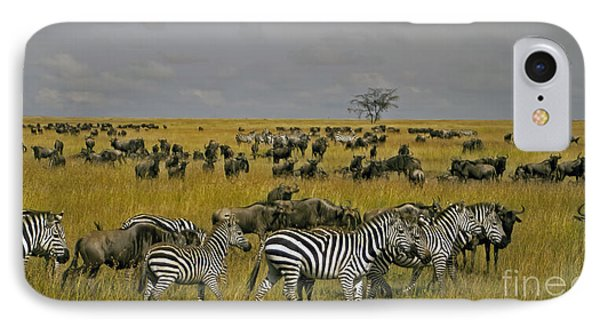 Zebras And Wildebeast   #0861 IPhone Case by J L Woody Wooden