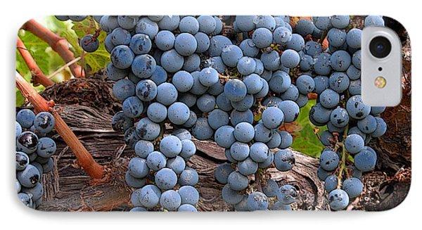 Zinfandel Wine Grapes Phone Case by Charlette Miller