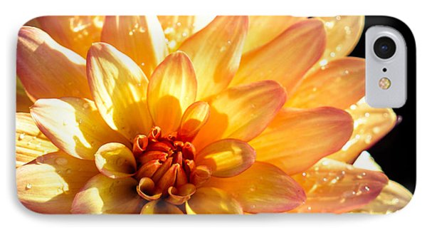 Zinnia IPhone Case by Cathy Donohoue