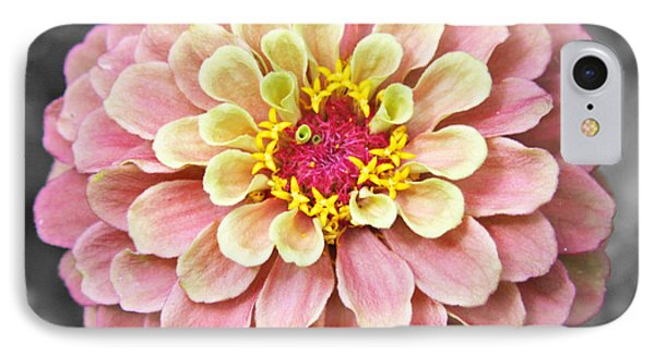 IPhone Case featuring the photograph Zinnia In Pink And Yellow by Brooke T Ryan