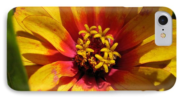 Zinnia Named Swizzle Scarlet And Yellow Phone Case by J McCombie