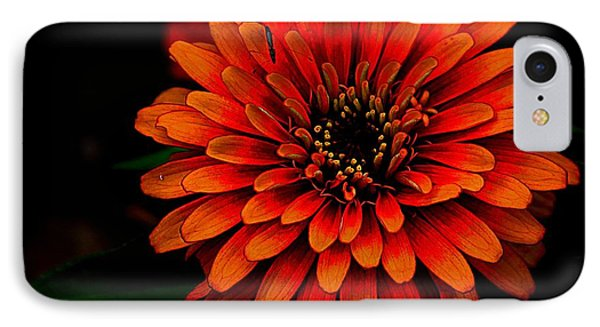 Zinnia Pop IPhone Case