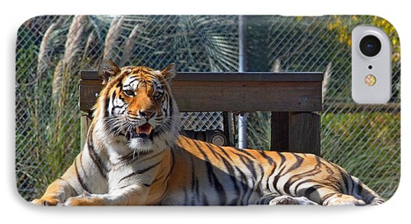 Zootography3 Tiger In The Sun Phone Case by Jeff at JSJ Photography