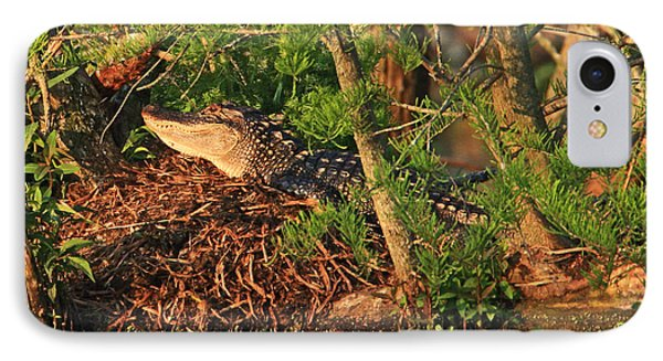 IPhone Case featuring the photograph  Alligator On Nest by Luana K Perez