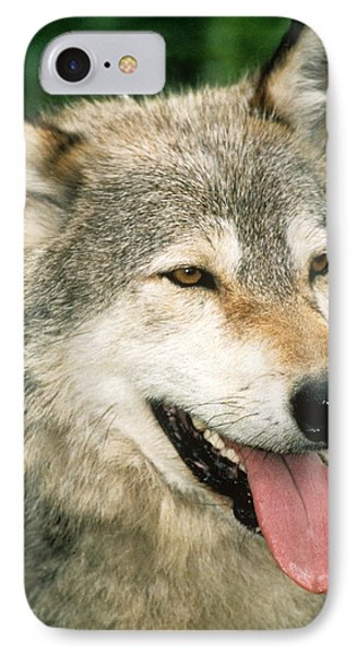 Happy Gray Wolf Phone Case by Larry Allan
