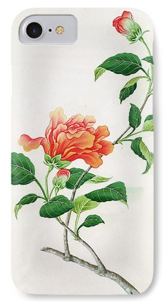Hibiscus Phone Case by Georg Dionysius Ehret
