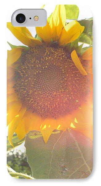 Sun Flower IPhone Case