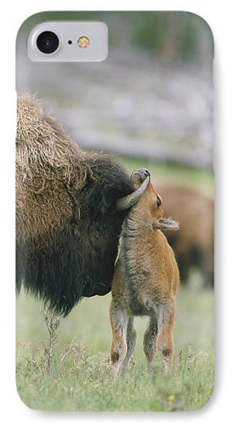 A Female Bison Bison Bison Stands Phone Case by Tom Murphy