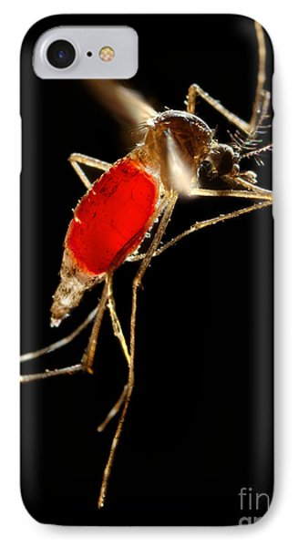 Aedes Aegypti Mosquito Phone Case by Science Source