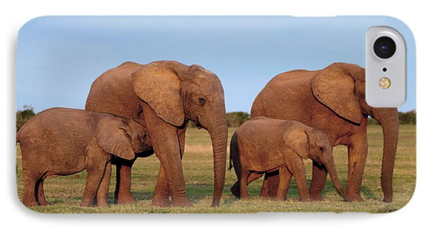African Elephants Phone Case by Peter Chadwick